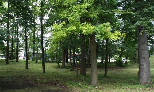 Grün erhalten: Baumschutz